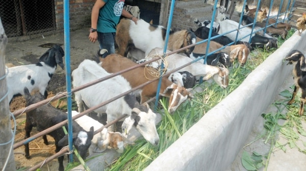 Goat Farming Loan and Subsidy.